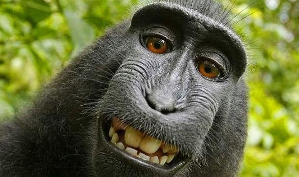 Açıklanamayan Olay Yüzüncü Maymun Deneyi Tarih Komplo