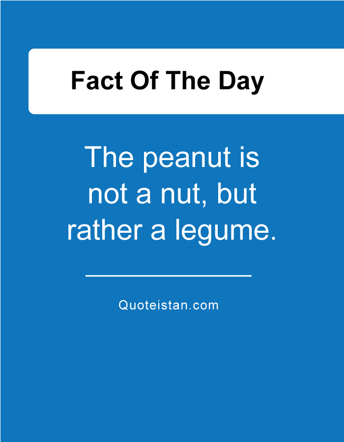 The peanut is not a nut, but rather a legume.