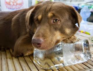 Resultado de imagem para dias quentes e cachorros