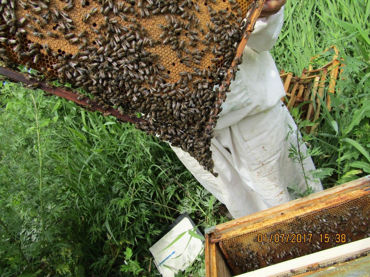 Сроки выставки пчел из зимовника весной
