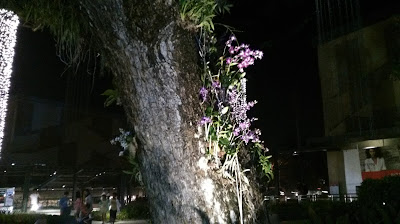 Cherry Mobile Alpha Prime 5 Sample Camera Output - Night Shot