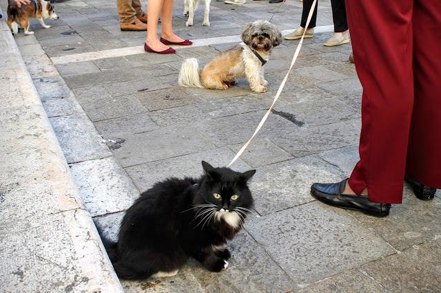 The Blessing of the Animals, San Nicolo dei Tolentini, Venice