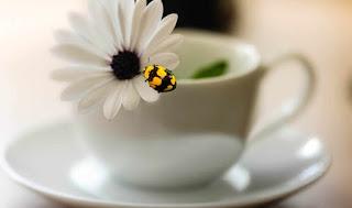 Bem-aventurados os que choram. Mateus 5.4.  Josias Brepohl / Jaqueline J. Vogel Firzlaff.Ilustração: Xícara de chá com uma margarida e uma joaninha preta e amarela sobre uma das pétalas.