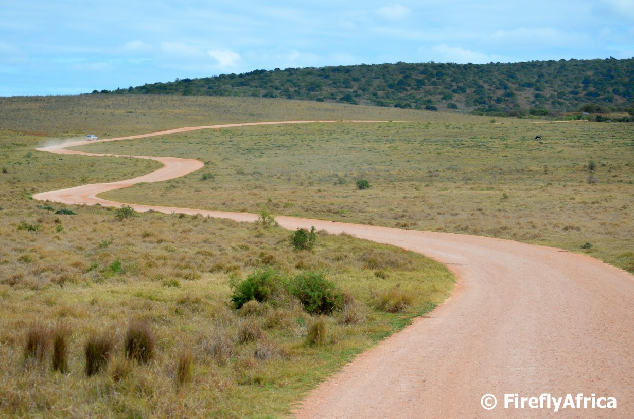 Port Elizabeth Daily Photo: The winding dirt road