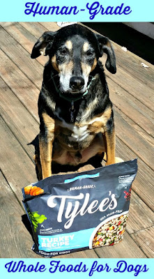rescued senior hound mix dog tylees food chewy