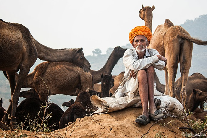 Pushkar, Camel Fair.