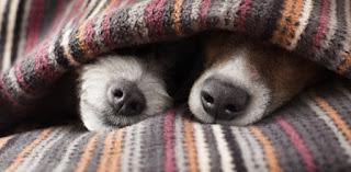 Utoplite psa - Panvet blog