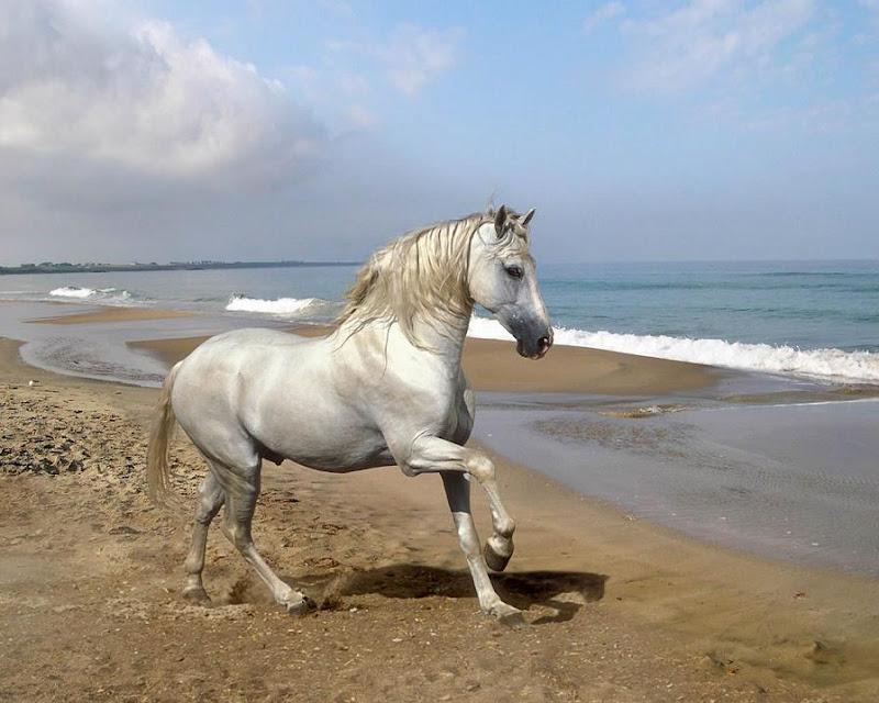 Horse - Beautiful Desktop WallPapers Seen On www.coolpicturegallery.us