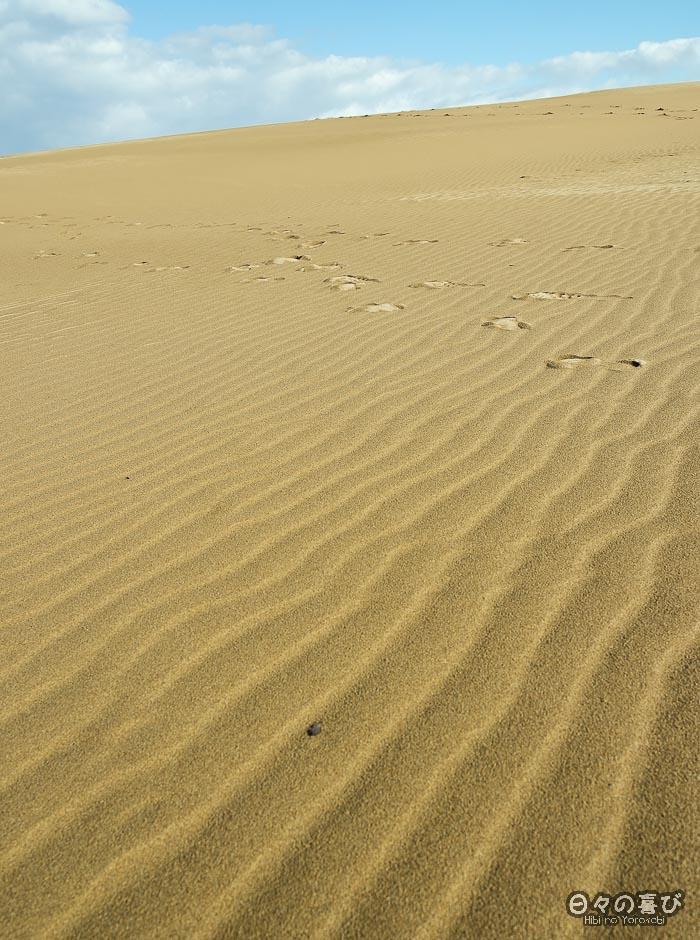 empreintes de pas dans les dunes