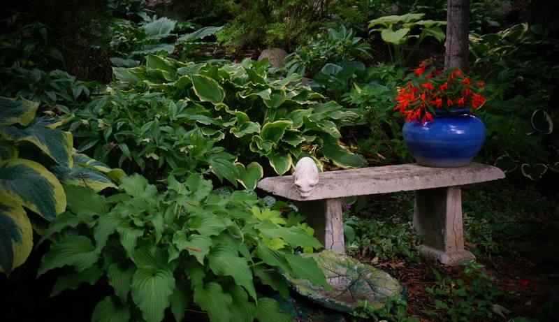 plantas de sombra y banco de piedra