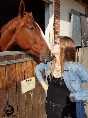 Portrait cheval alezan.