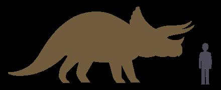 Трицератопс и человек - относительные размеры