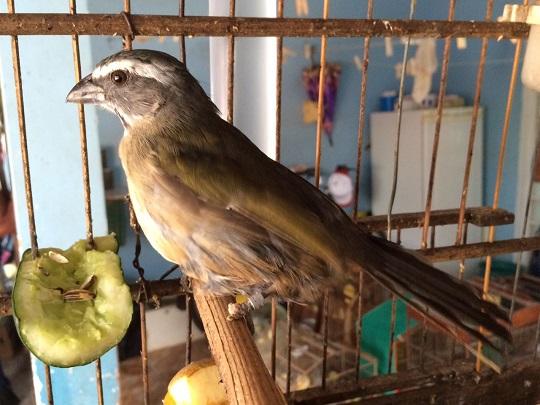 meio-ambiente-pássaros