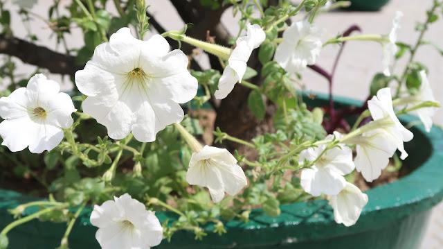 beautiful-flower-wallpaper