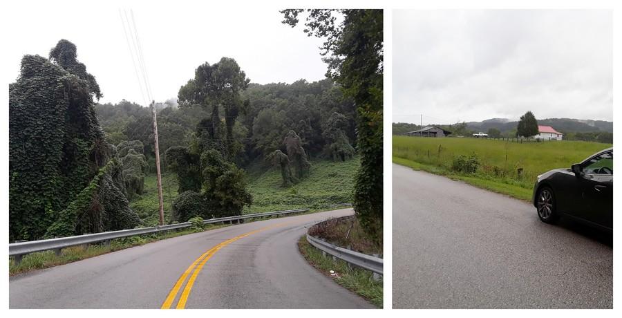 Nature verdoyante dans le Sud des Etats-Unis