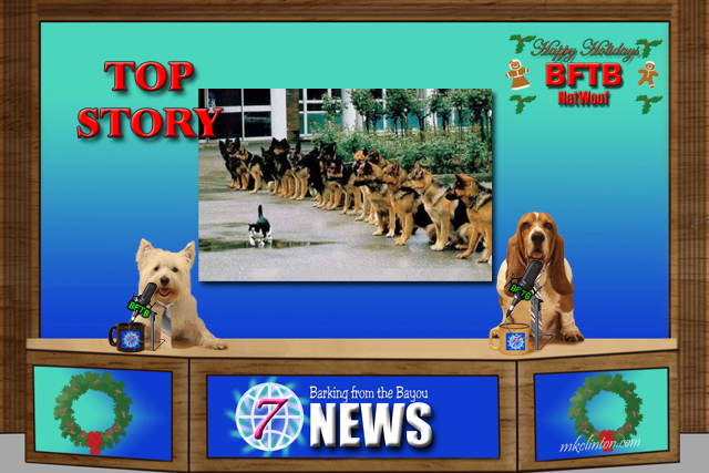 BFTB NETWOOF News Top Story of a cat training dogs