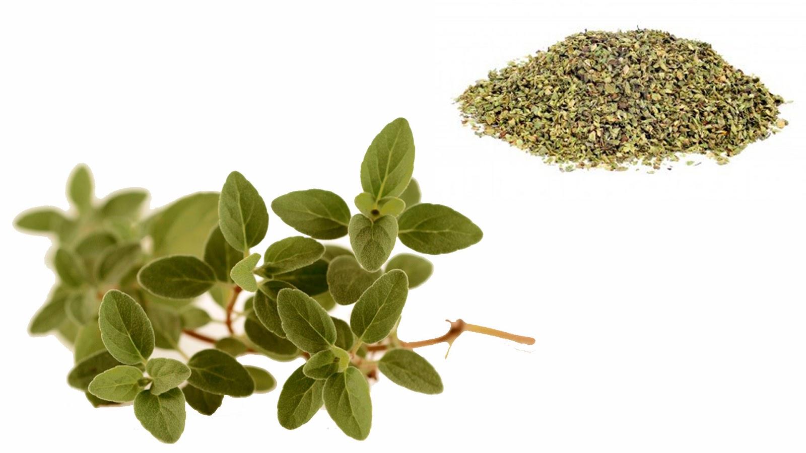Pasandodato 7 hierbas para cocinar for Plantas aromaticas para cocinar