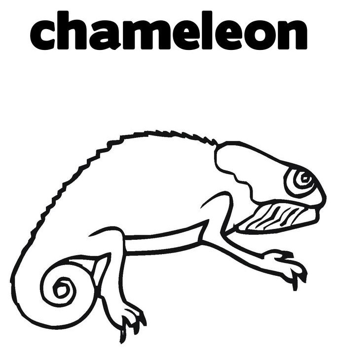 Chameleon Coloring Pages To Printable