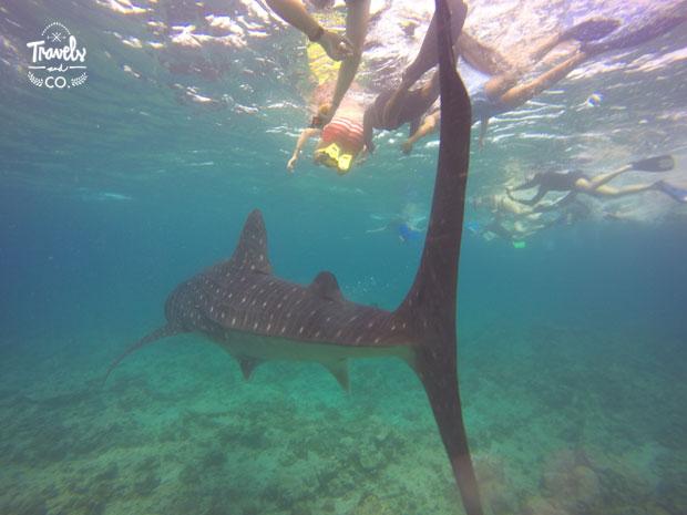 donde alojarte en Maldivas tiburon ballena