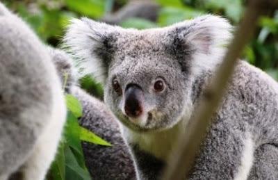 Persiapan Budget Wisata Ke Australia