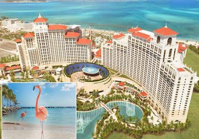 Emprego dos sonhos: cuidar de flamingos nas Bahamas