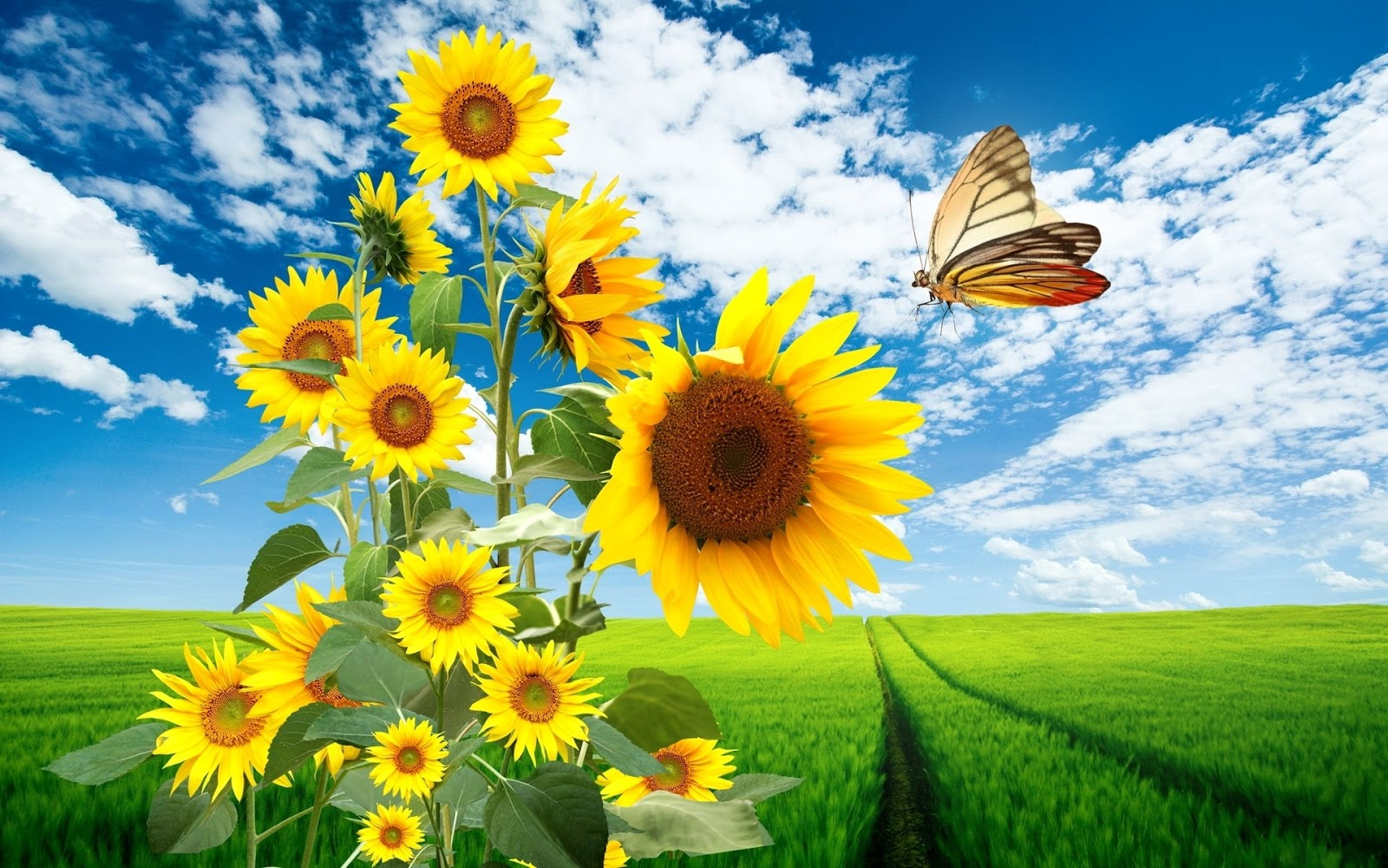 Wallpapers Sols: Nature Sunflowers Hd Wallpapers