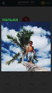 Мальчик идет по пальме на фоне неба с облаками, которая наклонена