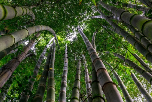 Bamboo and other things in creation are studied for biomimetics