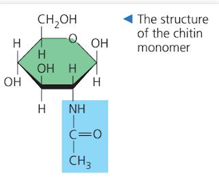Kitin, struktur monomer kitin, gambar monomer kitin, kitin adalah