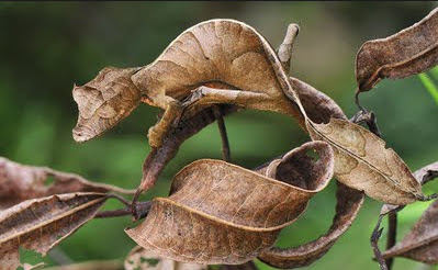 adaptasi tingkah laku pada manusia  adaptasi tingkah laku pada tumbuhan  adaptasi tingkah laku pada hewan  seleksi alam  contoh adaptasi tingkah laku  adaptasi tingkah laku pada rayap  pengertian adaptasi tingkah laku  adaptasi tingkah laku pada hewan dan tumbuhan