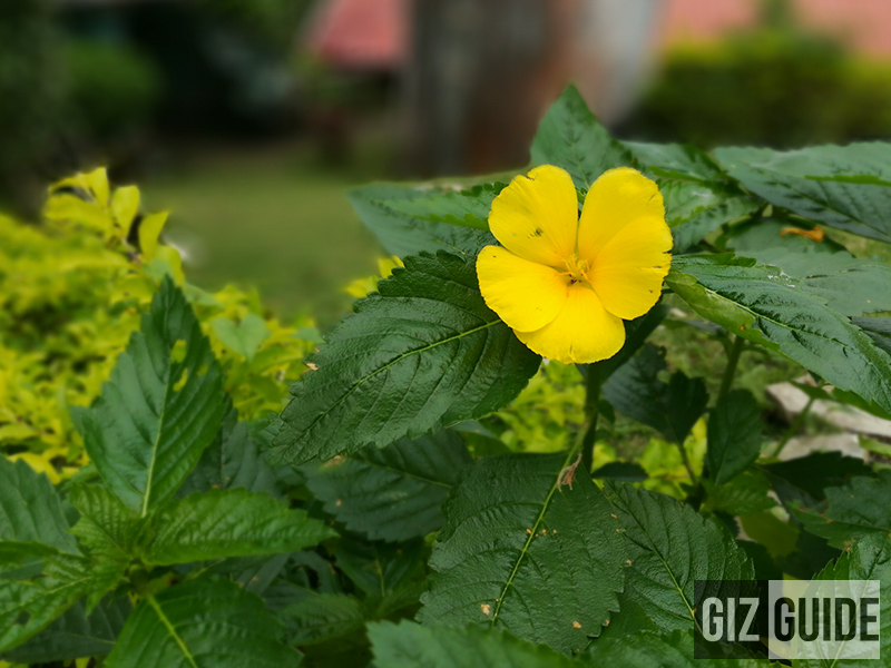 Background blur using f/4.0 mode