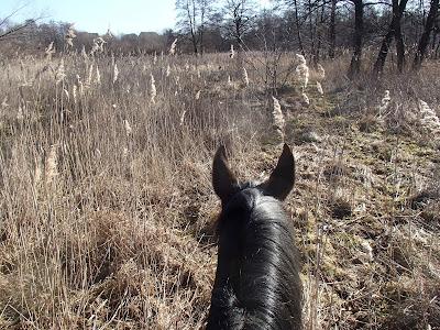 konie, jazda konna w terenie