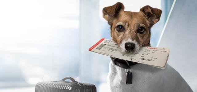 Aerolínea estadounidense se rehúsa a llevar gatitos y perros en sus vuelos