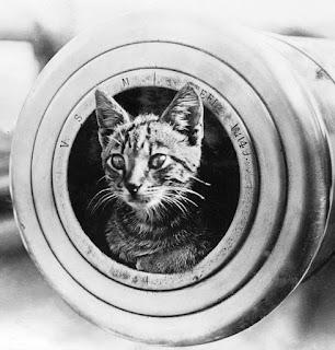 Fotografía en blanco y negro de un gatito dentro de un caññon