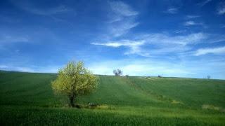 cuadros-paisajes-naturales-realistas