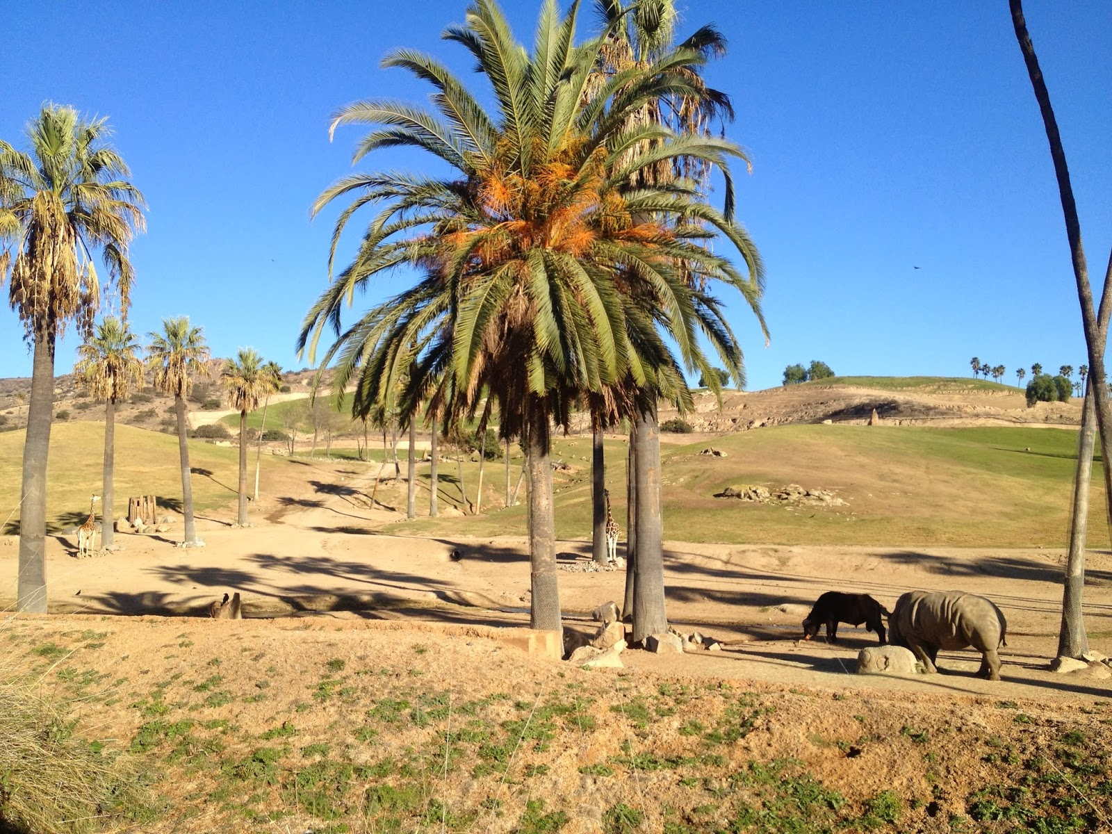 A Beautiful December Day At The San Diego Zoo Safari Park