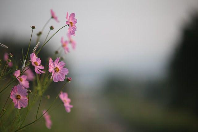 hoa dai dep nhat 1