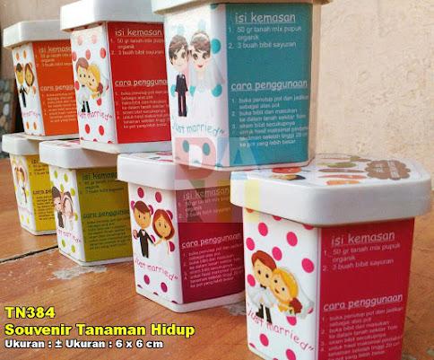 Souvenir Tanaman Hidup