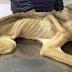 Όταν τον βρήκαν ζύγισε 7 κιλά. 7 εβδομάδες μετά, δείτε την εκπληκτική του μεταμόρφωση!