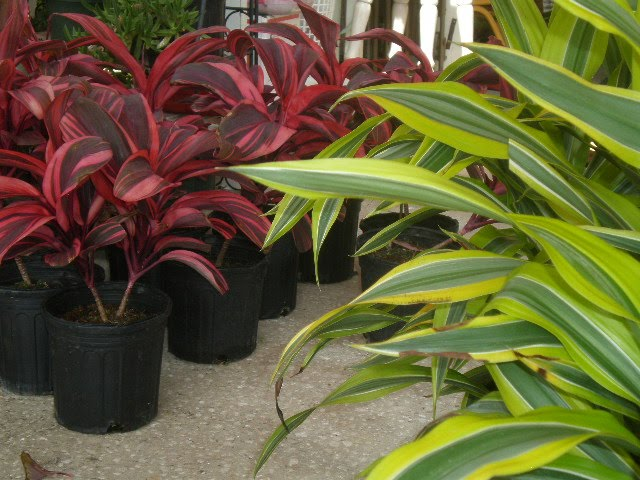 Lots Of Our Customers Have Been Asking For Shade And Or Indoor Plants We A Great Selection To Bring Market This Weekend Check Out Some The