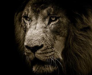 Астрология, Совместимость Льва и Львицы.