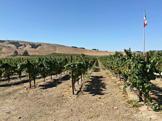 Travel Tuesday: Sonoma Wine Tour