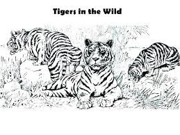 Tiger In The Wild Coloring Sheet Images