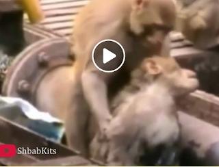 بالفيديو حيوانات تنقذ بعضها البعض بشكل لا يصدق
