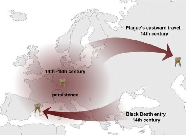 Single strain of plague bacteria sparked multiple historical and modern pandemics