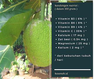Kandungan nutrisi buah sukun