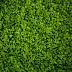 Descubren nuevas claves de la adaptación de las plantas ante la sequía
