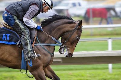 Racing tips, betting tips