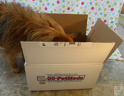 Jada looking into the 1-800-PetMeds box