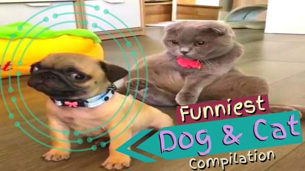 funny animal video Cat and Dog Funpetvid